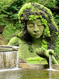 INSP-garden